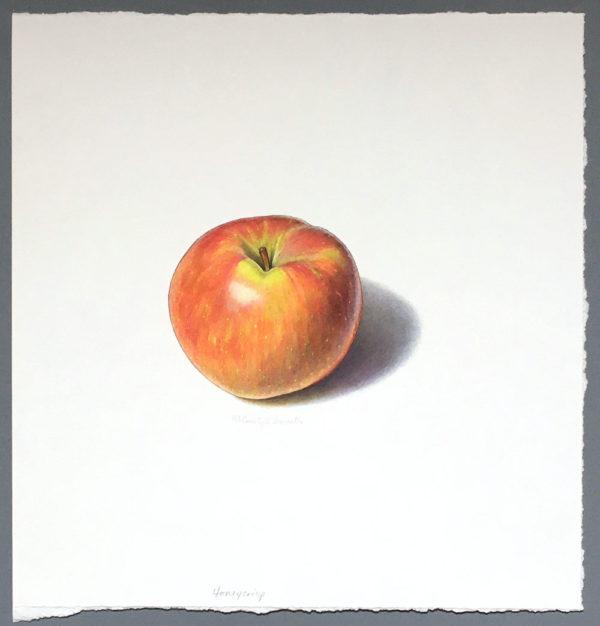 Honeycrisp apple art