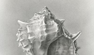 original drawing conch shell