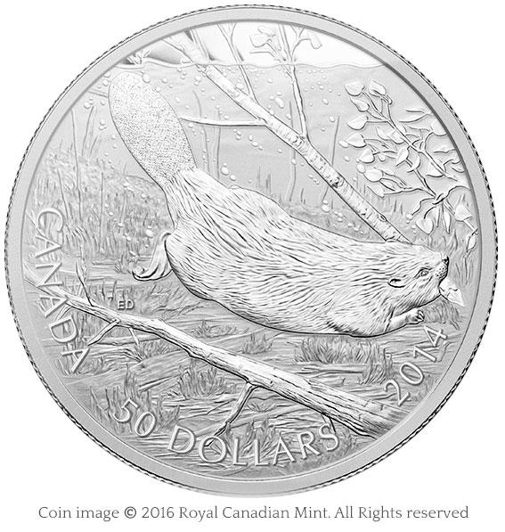 coin beaver swimming