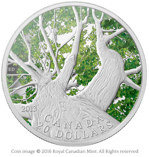 coin maple canopy 2013