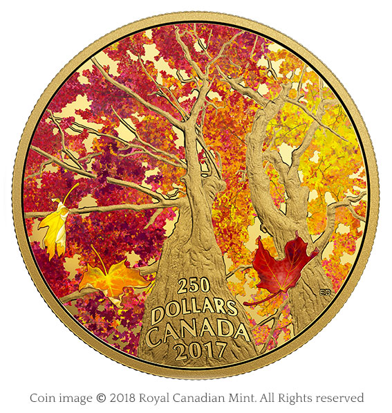 coin maple canopy 2017