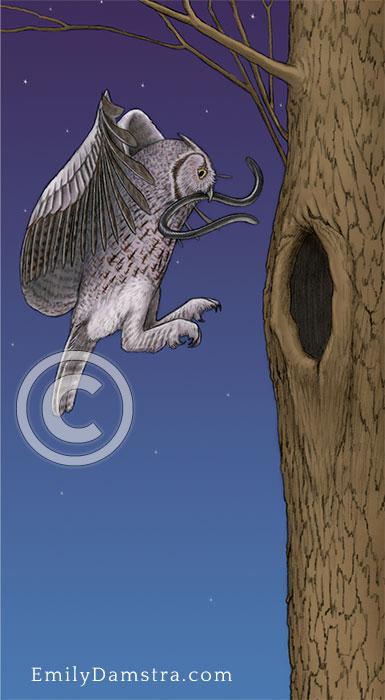 Illustration of screech owl blind snake